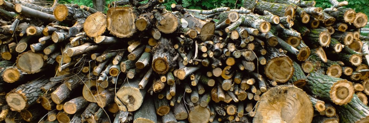 photo of stacked wood logs