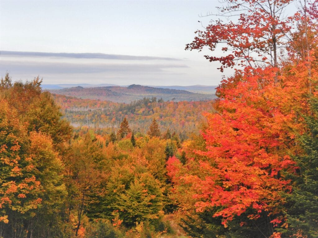 photo of maine forest in autumn