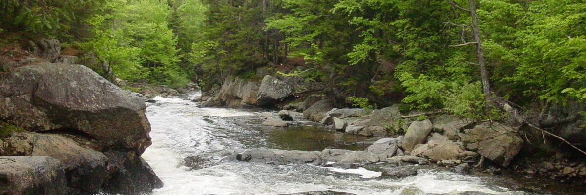photo of stream running through maine forest