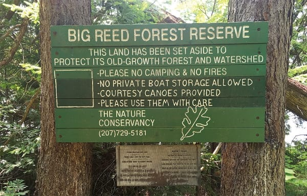 photo of sign on trees big reed forest reserve this land has been set aside to protect its old-growth forest and watershed