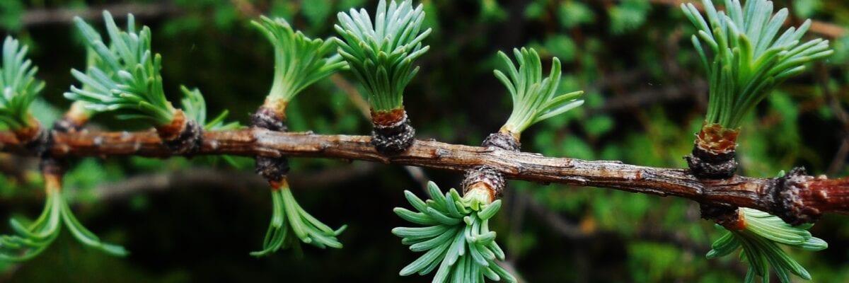 photo of tree buds