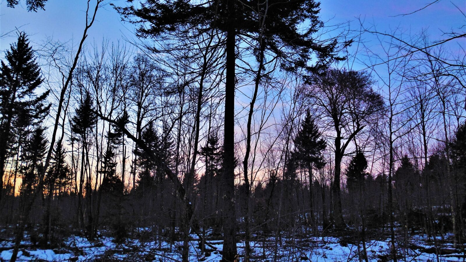 photo of winter forest scene with sunset in background