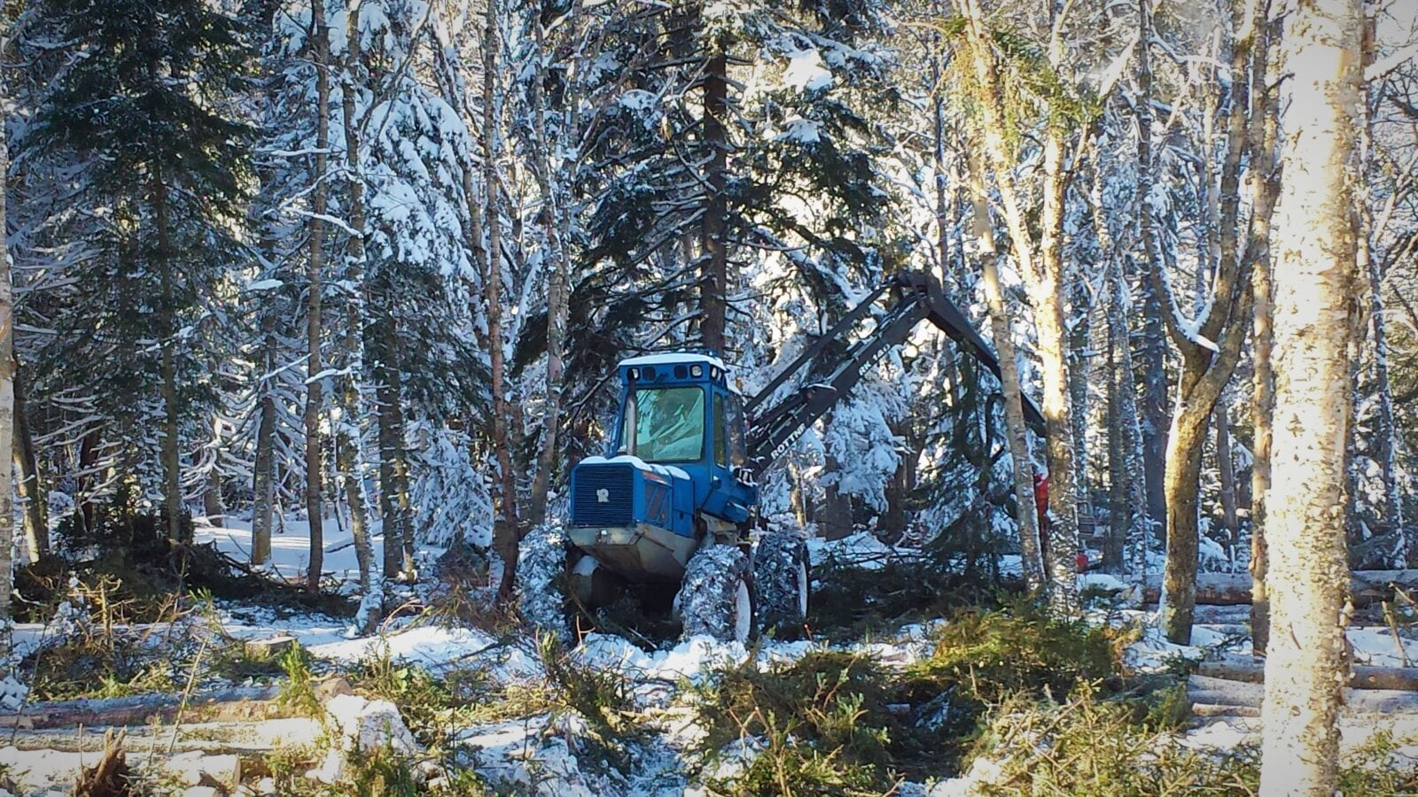 photo of tree clearing heavy equipment in forest in winter