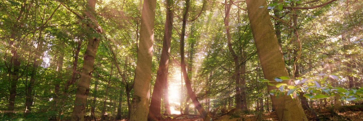 photo of sunlight beaming through forest trees