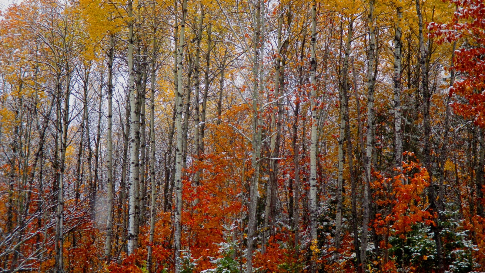 photo of autumn trees with a dusting of snow