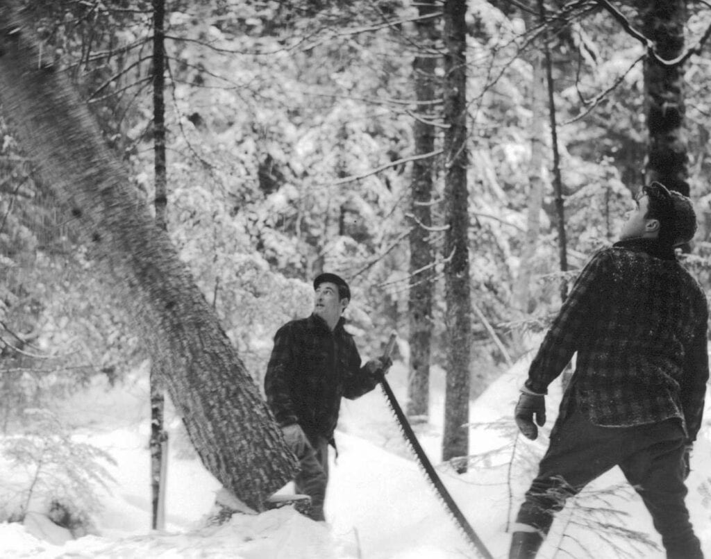 black and white photo of two men cutting down tree by hand