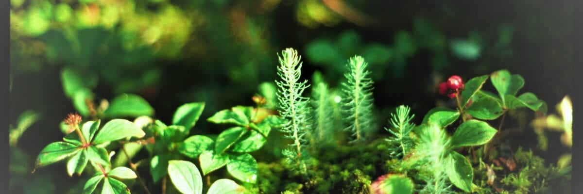 photo of plants growing on forest floor