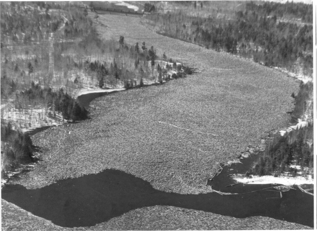 black and white photo of wood being transported downriver