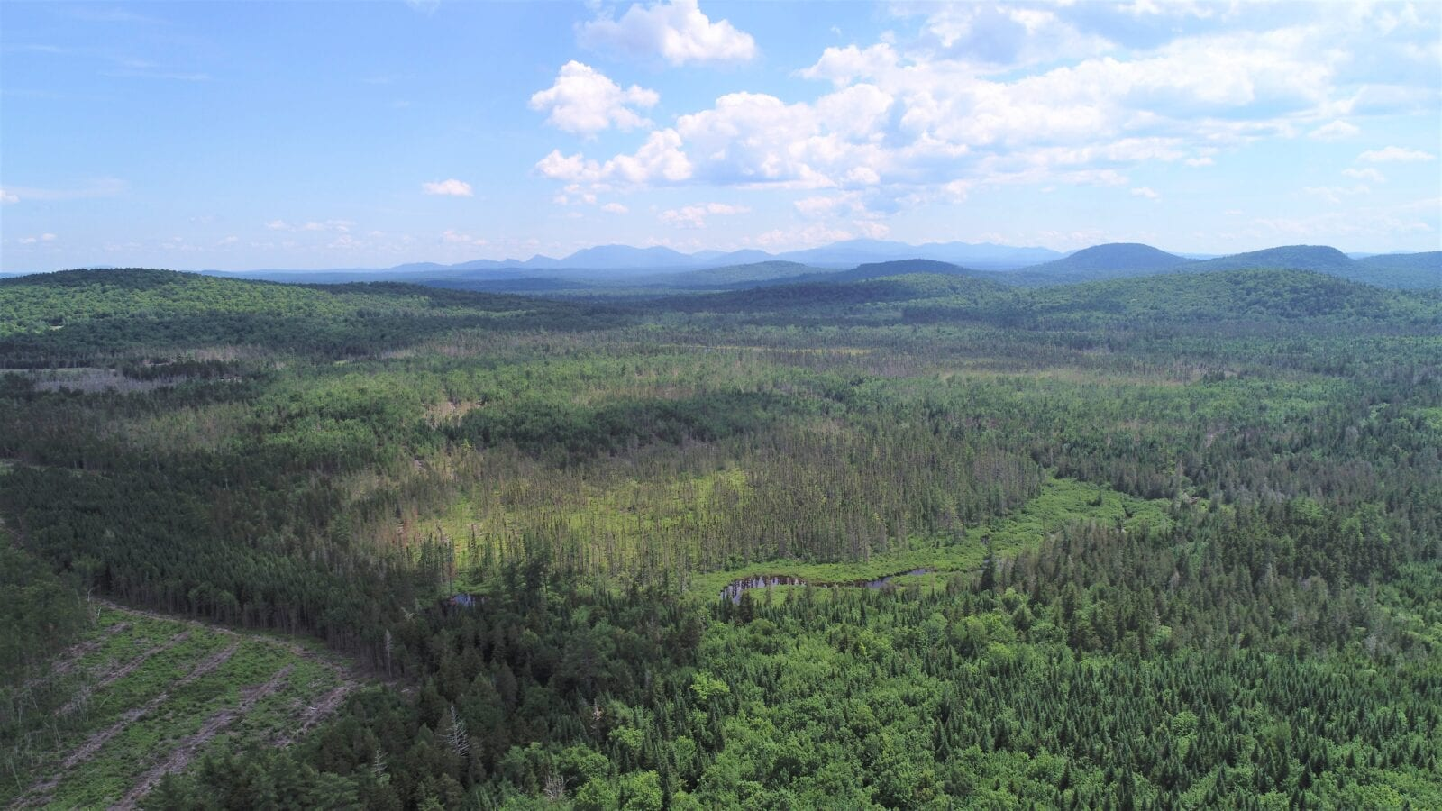 aerial photo of forest with mountains in the distance