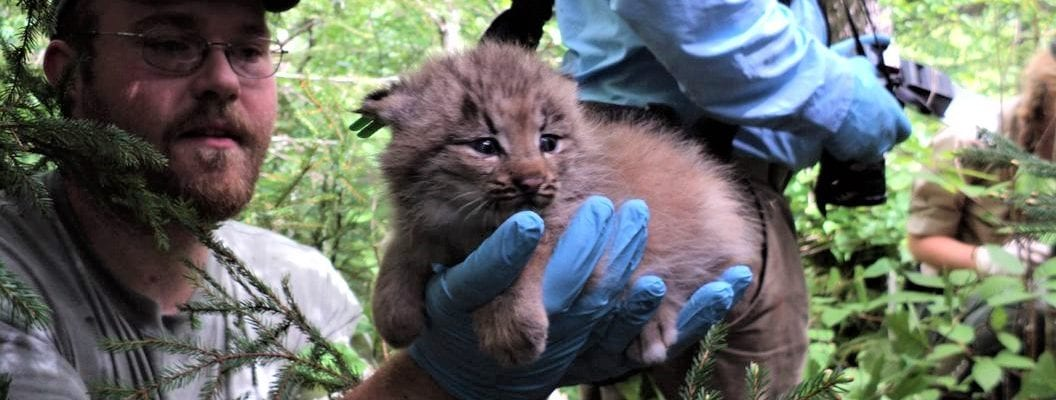 photo of man holding lynx cub in forest